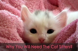 Top 6 Reasons that People Need Cat Sitters