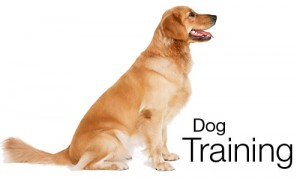Benefits Of Dog Training
