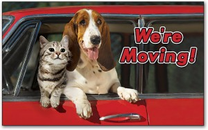 8 Tips for Moving With Pets