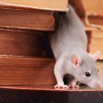 5 Ways To Protect A Home From Rats And Mice