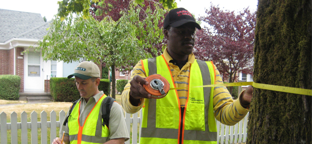 Why Keeping A Tree Inventory Of Your Property Promotes Longevity