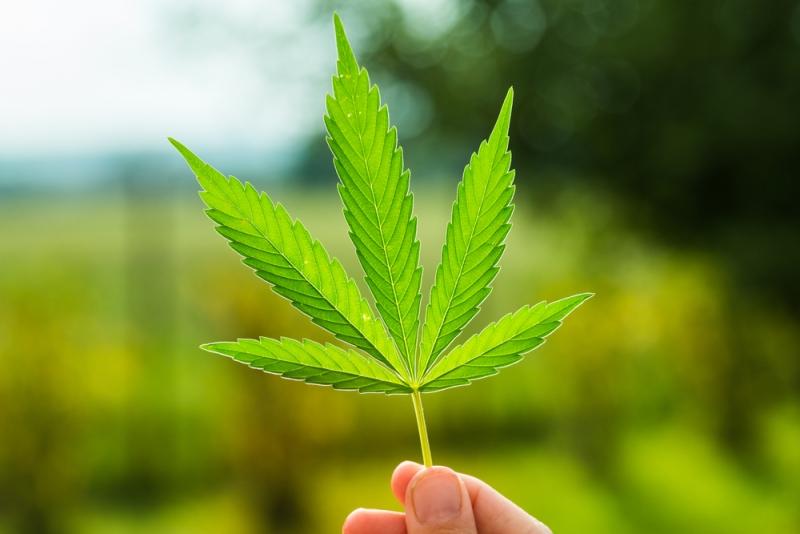 4 Ways to Make Money from Marijuana Legalization